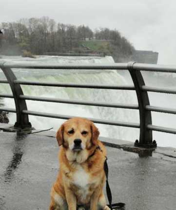 dog friendly niagara