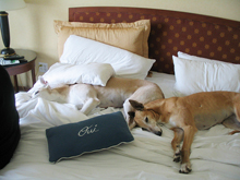 pet friendly hotels Niagara Falls